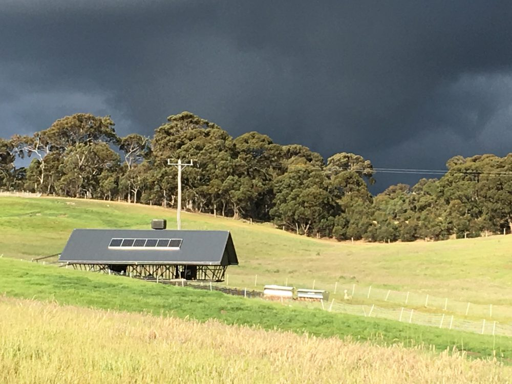 chicken coop with dramatic sky