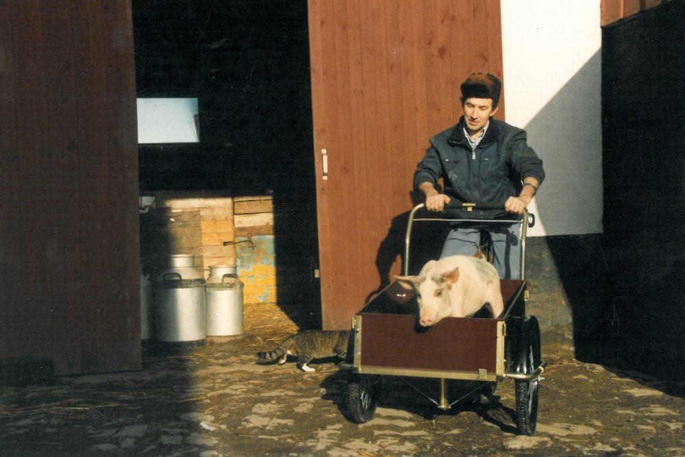 Pig in a cargo bike